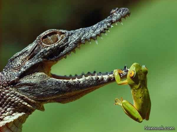 تصاویر وحشتناک ترین و عجیب ترین حیوانات دنیا