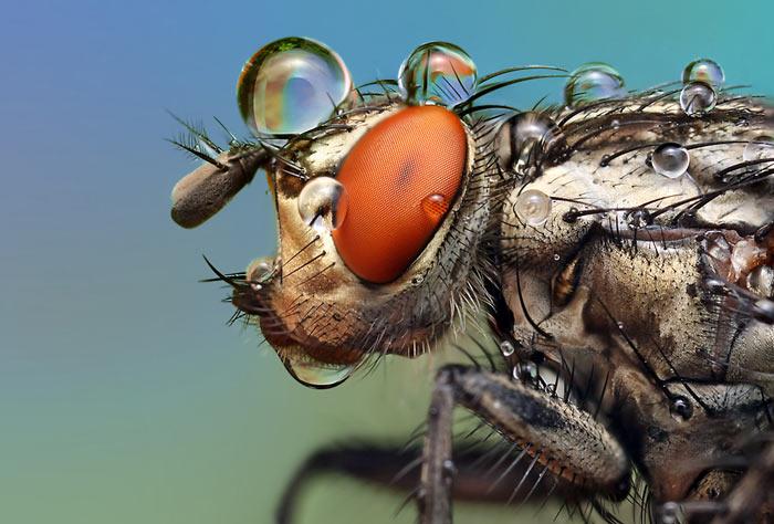 عکس هایی حیرت انگیز از حشرات (2)