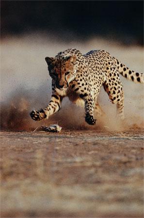 حیوانات رکورددار را بشناسید !+ عکس