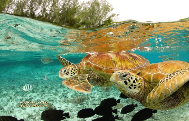 عکسهایی از دنیای زیبای حیوانات (2)