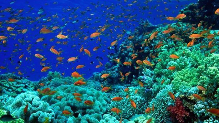 عجایب خارق العاده از اعماق دریاها (عکس)