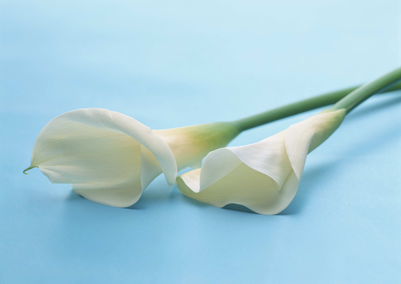 عکس دسته گل های بسیار زیبا