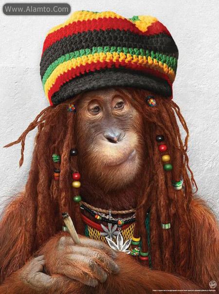 عکسهای میمون های فشن و فوق العاده خنده دار