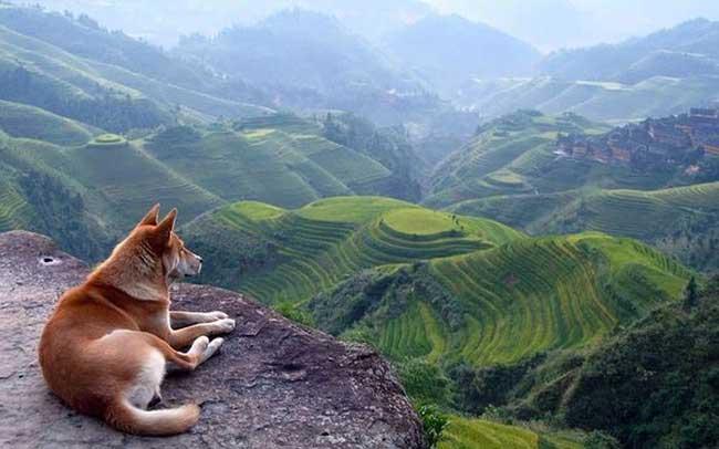 عکس هایی از دنیای حیرت انگیز حیوانات (7)