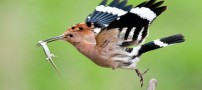 عکس های پرندگان زیبا و رنگارنگ
