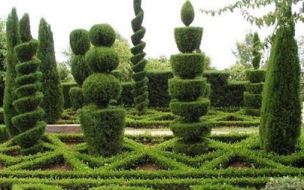 عکس های جالب از هنرنمایی با درختان