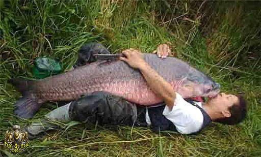 عكسهای عجیب ترین ماهی های صید شده