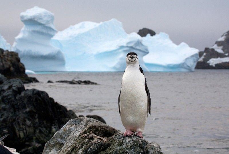 عکس جالب و دیدنی از دنیای حیوانات