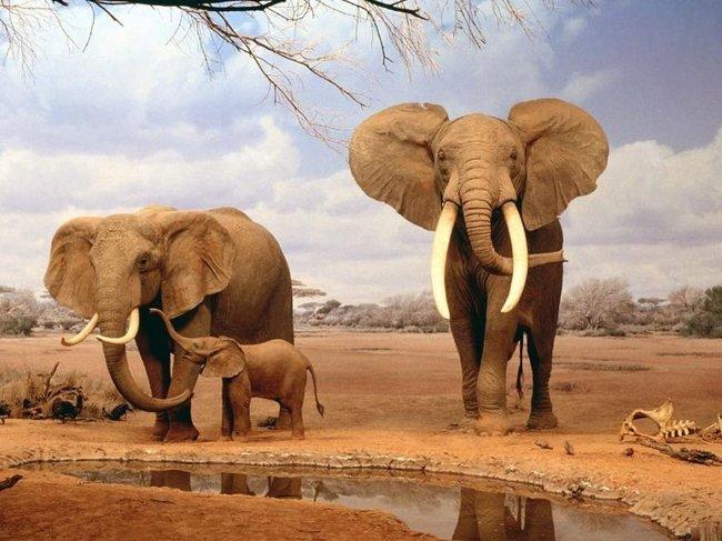 عکس های بی نظیر از حیات وحش