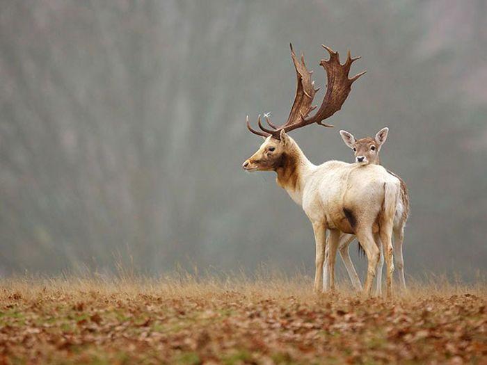 عکسهای حیرت انگیز  و زیبا از دنیای حیوانات