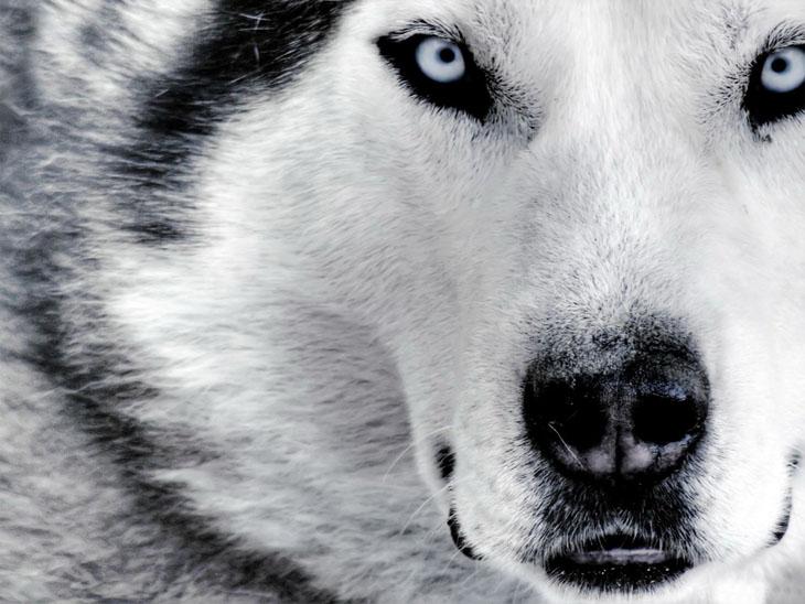 عکس های زیبا و جالب از حیوانات