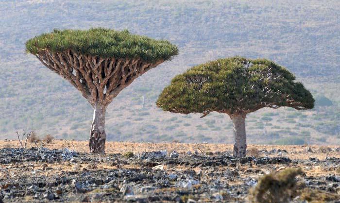 عکس های زیبا و دیدنی از مناظر دهگانه جهان