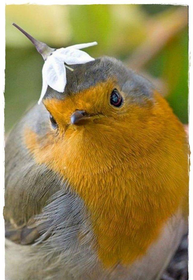 عکس های زیبا از پرندگان