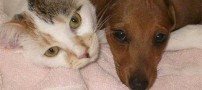 دوستی میان سگ و گربه (عکس )