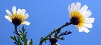 عکسهایی چشم نواز از گلهای رنگارنگ