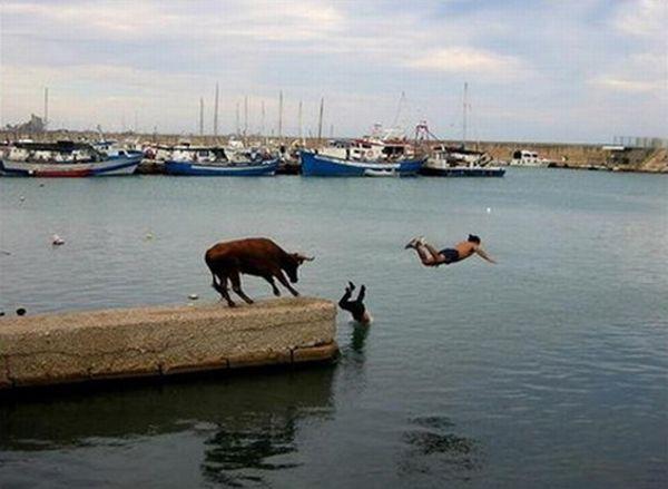 عکسهای خنده دار از شکار لحظه ها