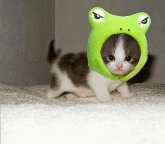 عکس های جالب و بامزه از حیوانات (2)