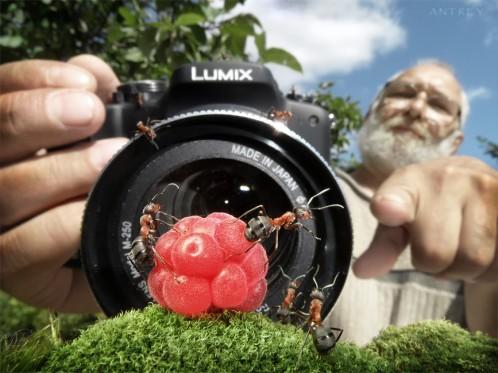 عکس های فانتیزی از دنیای مورچه ها