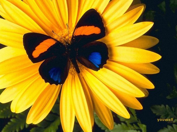 عکس های شگفت انگیز از پروانه ها