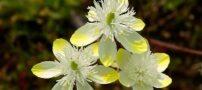 عکس از گل های زیبا نشانگر قدرت بی نظیر خداوند