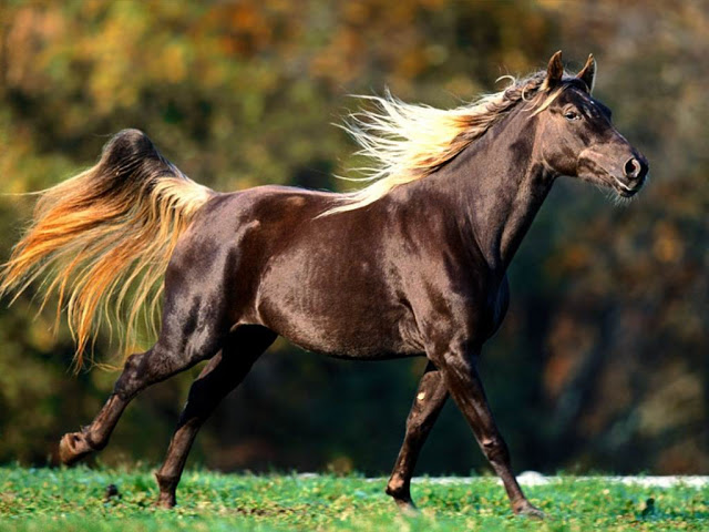 عکس های زیبا از اسب ها