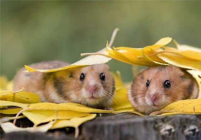 عکس های دنیای حیرت انگیز حیوانات (6)