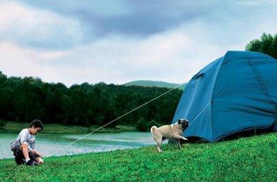 عکس های جالب از سگ خانگی باهوش