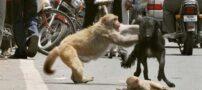 غریزه مادری در حیوانات (عکس)
