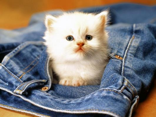 عکس های گربه ناز و ملوس