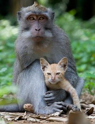 عکس های زیبا از دنیای حیوانات