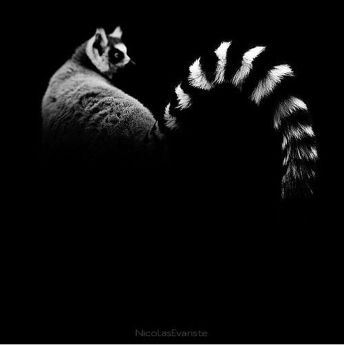 عکس های سیاه و سفید از حیوانات (2)