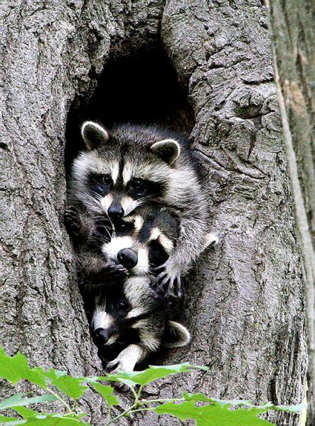 عکس های دیدنی از حیوانات (2)