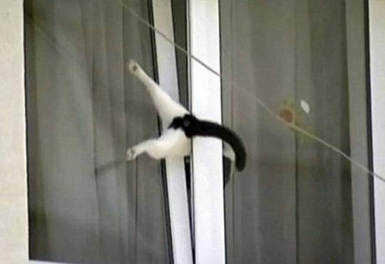 عکس های خنده دار از کنجکاوی های بیجای حیوانات