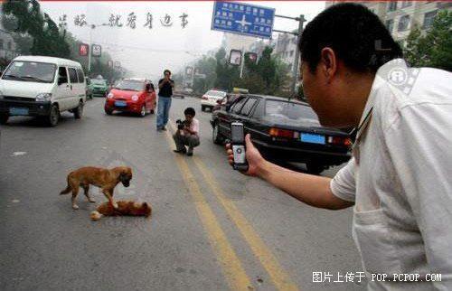 عشق در وجود سگ ( عکس)