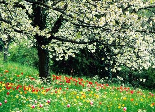 زیباترین عکس های فصل بهار