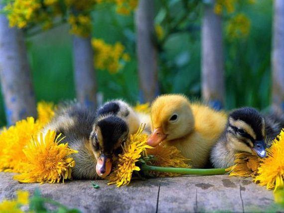 عکس های جالب و دیدنی از حیوانات (4)