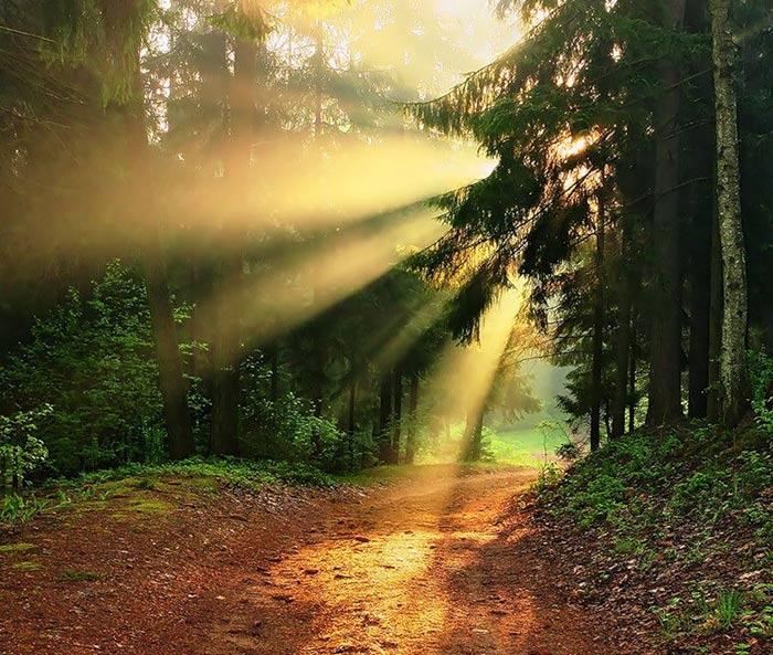 عکسهای طبیعت زیبا و دیدنی
