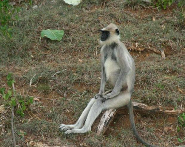 عکس های جالب نشستن حیوانات مثل انسان