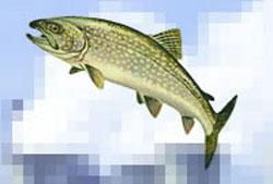 ضرب المثل ماهی از سرگنده گردد نی زدم