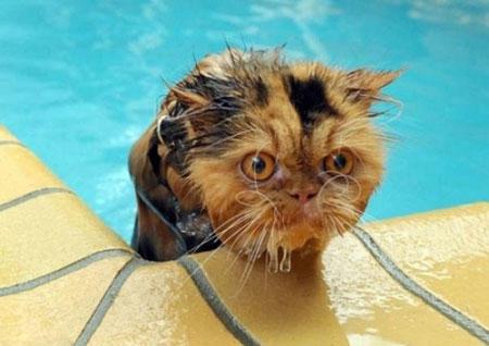 تصاویر طنز و بامزه حیوانات