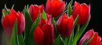 آشنایی با محلول محافظ یا نگهدارنده گل ها
