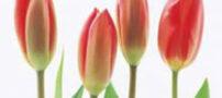 زمان گل دهي گياهان و تغييرات جوي