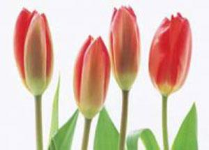 زمان گل دهی گياهان و تغييرات جوی