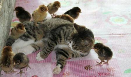عکس های جالب و خنده دار از حیوانات (3)