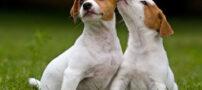 نکاتی در مورد نگهداري سگ
