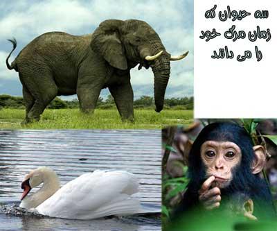 3 حیوانی که از زمان مرگشان باخبرند