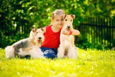 اصول نگهداری از حیوانات خانگی