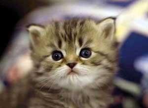 حکایت گربه مزاحم