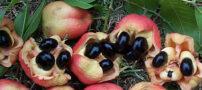 میوه هایی کمیاب و عجیب در تهران ! (+عکس)