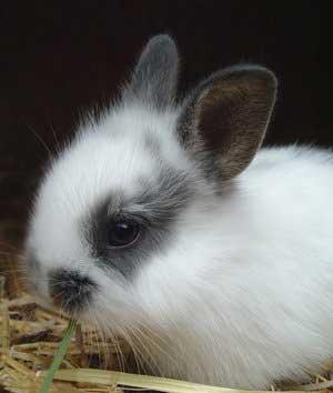 اصول نگهداری درست از خرگوش
